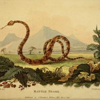 1811 color illustration of a rattlesnake against a distant mountain landscape