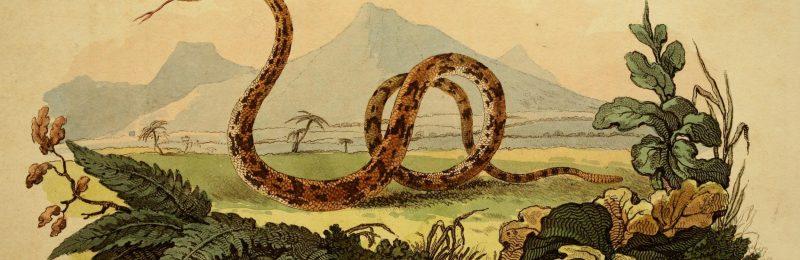 1811 color illustration of a rattlesnake against a distant mountain landscape