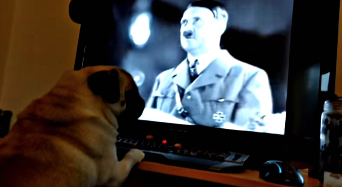 Photo of pug checkin' out Hitler video.